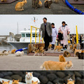 This is an island in japan which is occupied by cats