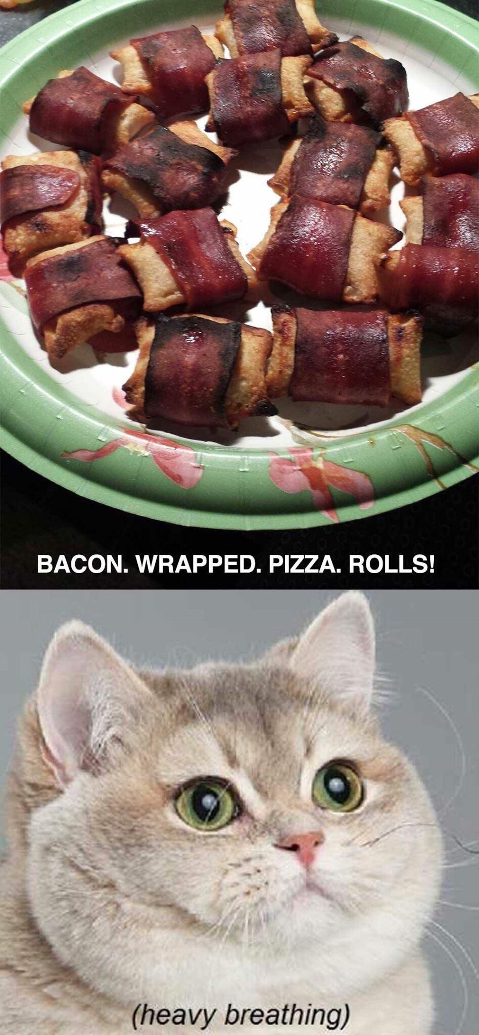 I love this cat - meme