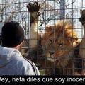 Alguien háblele a la PETA, soy inocente woei