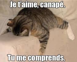 Ce chat me comprend !! - meme
