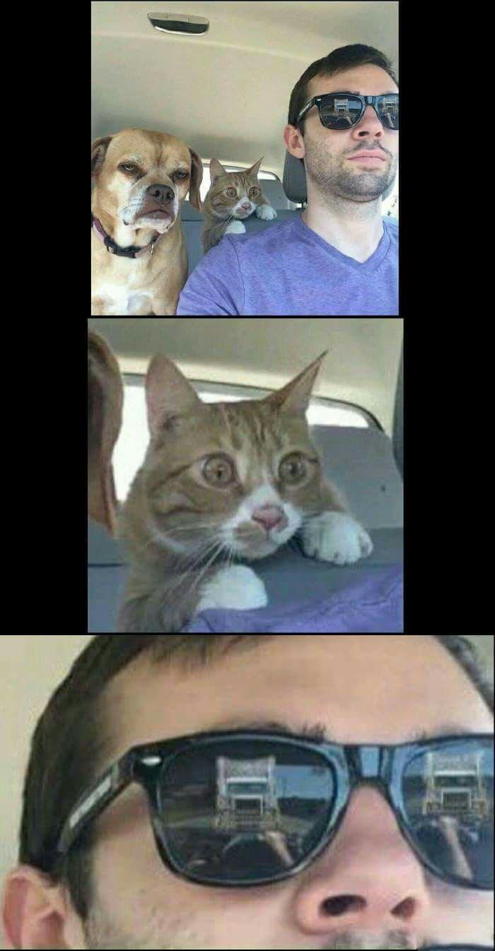 Meow...Meow ....*crash* - meme