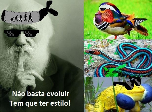 Pq sem estilo ninguem evolui! - meme