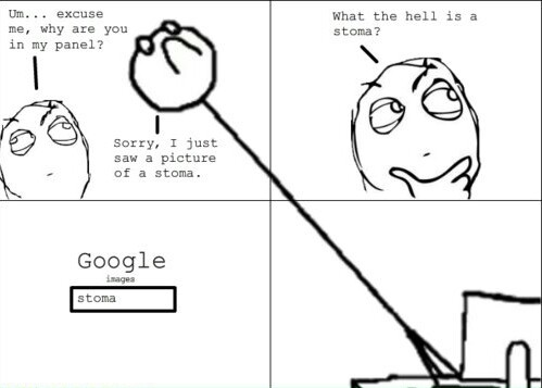 Panelception (look up stoma) - meme