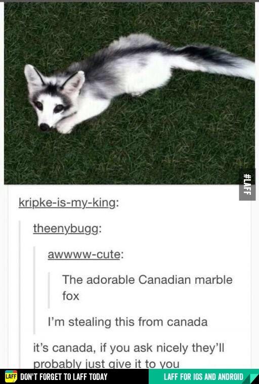 Sorry for canadian joke - meme