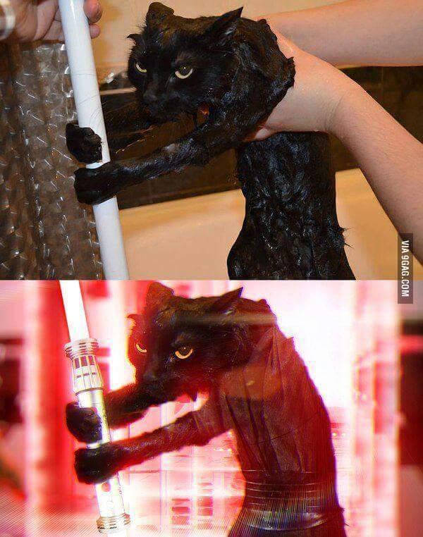 Jedi Cat - meme