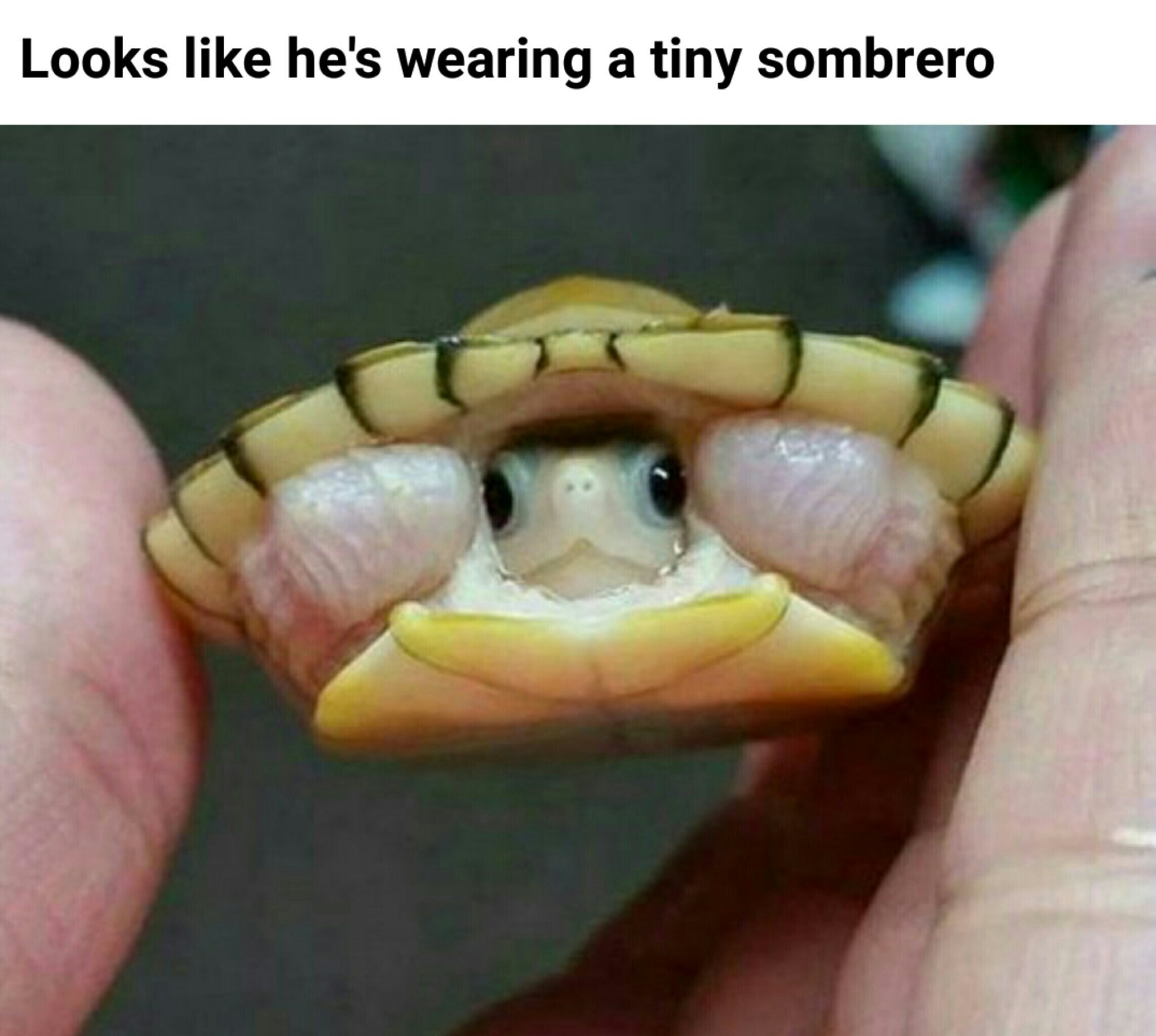 Cutest thing ever. - meme