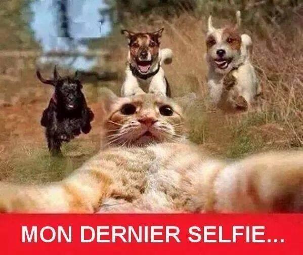 Le titre prend un selfie - meme