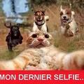 Le titre prend un selfie