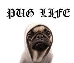 Pug life ... sigueme y te sigo - meme