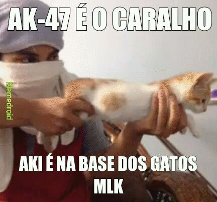 GATINHO - meme