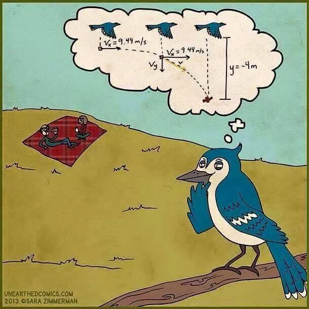 Pájaros matemáticos - meme
