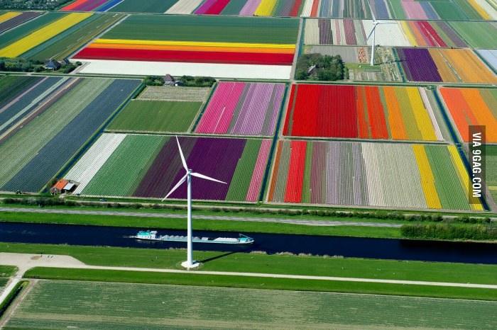 Perfection aux Pays-Bas - meme