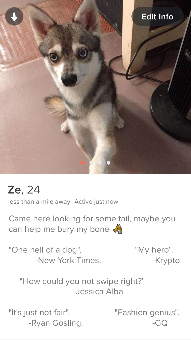 I made a Tinder account for my dog, he's quite popular - meme