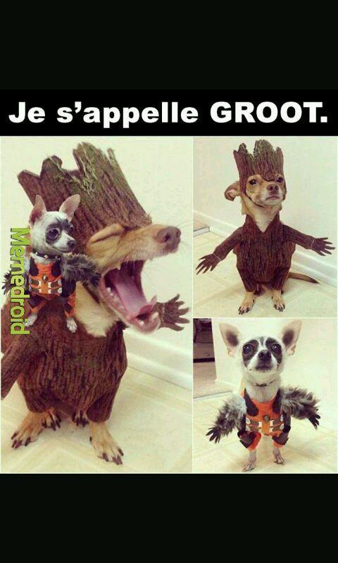 Pauvre chien - meme