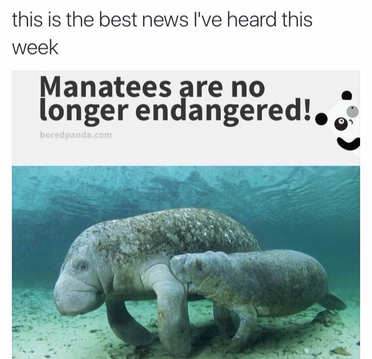 yay! manatees are the best - meme