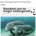 yay! manatees are the best