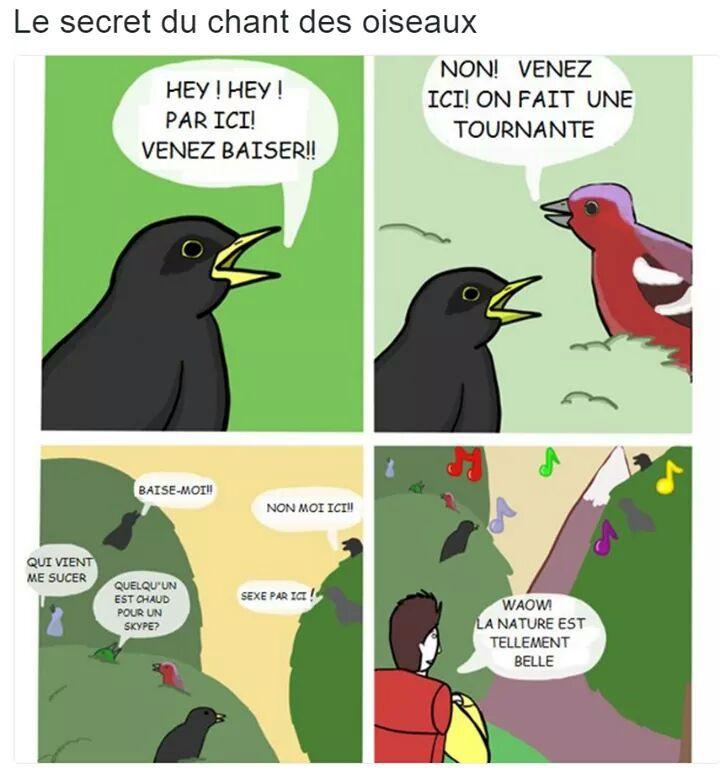 Champs des oiseaux v2 - meme