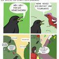 Champs des oiseaux v2