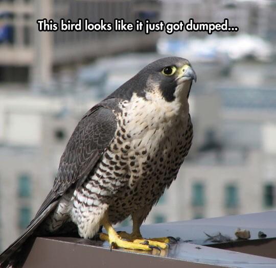 547cbc0b91449 sad bird meme by soydolphin ) memedroid