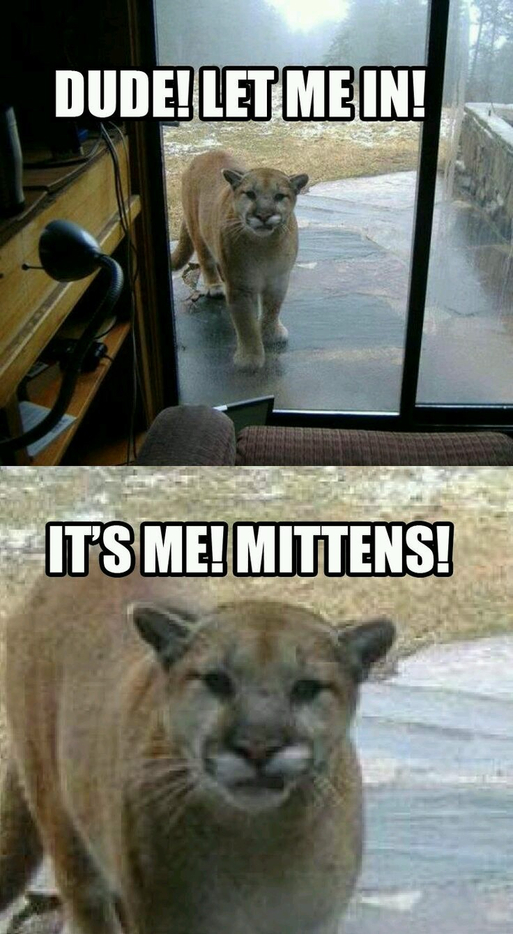 Mittens just wants some love - meme