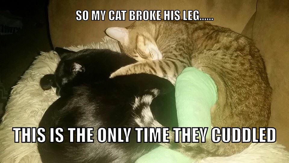 It's caturday everyday - meme