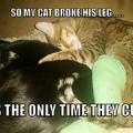 It's caturday everyday