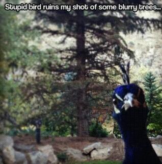 Goddamnit bird - meme