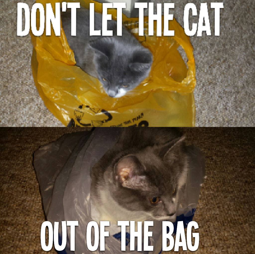 First comment loves bags of pussy - meme