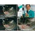 pobre gato kawaii ;(