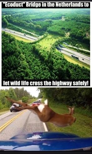 deer falling - meme
