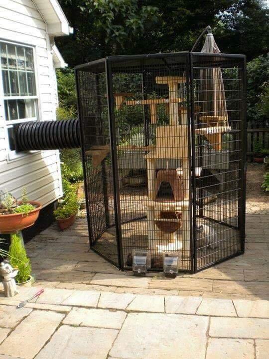Cat cage - meme