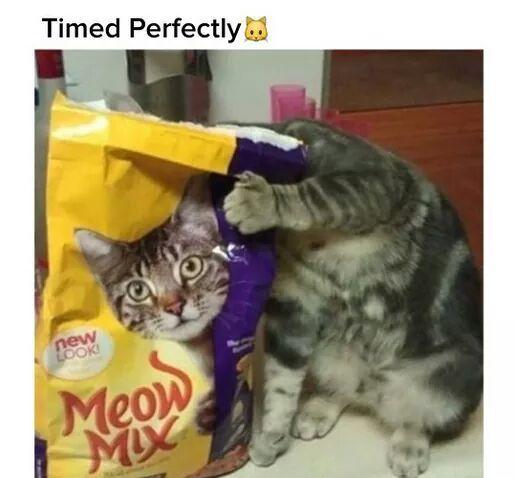 Meow meow meow meow - meme