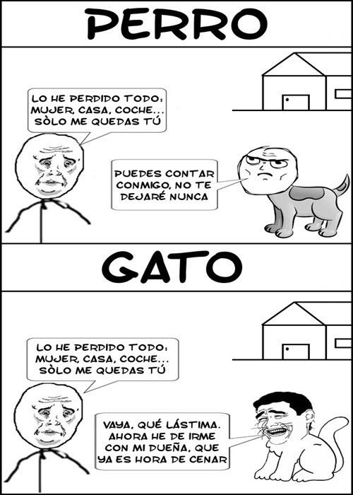 gato trull - meme