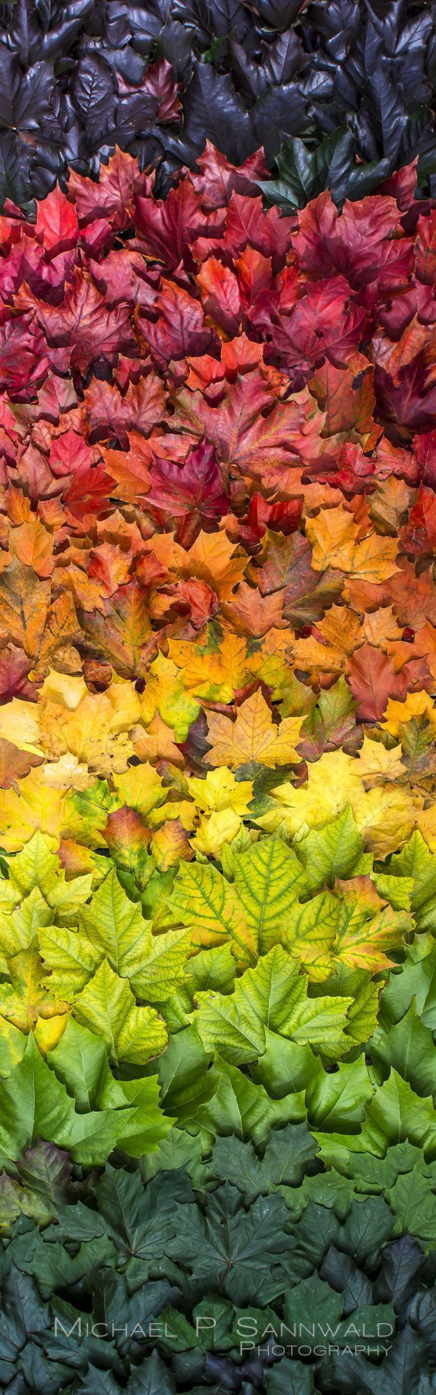 50 nuances d'automne - meme