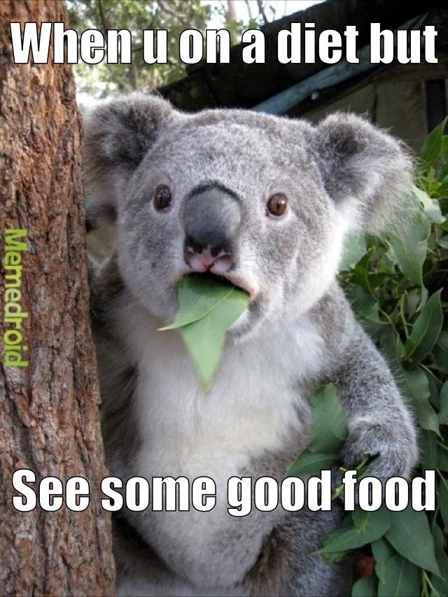 Surprised Koala - meme