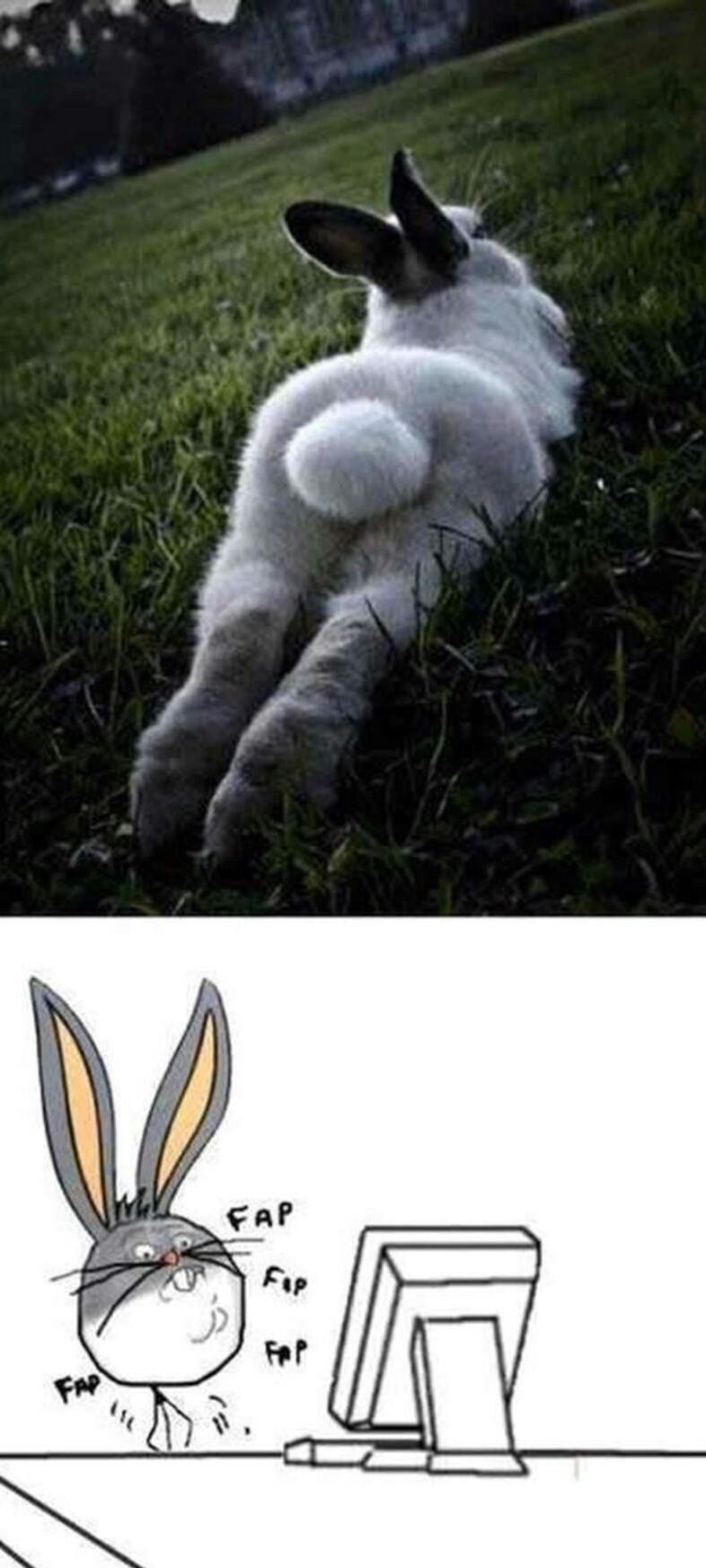 Lola bunny - meme