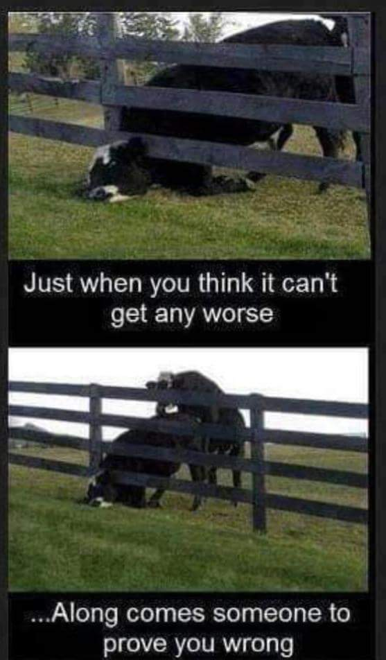 Poor cow . . . - meme