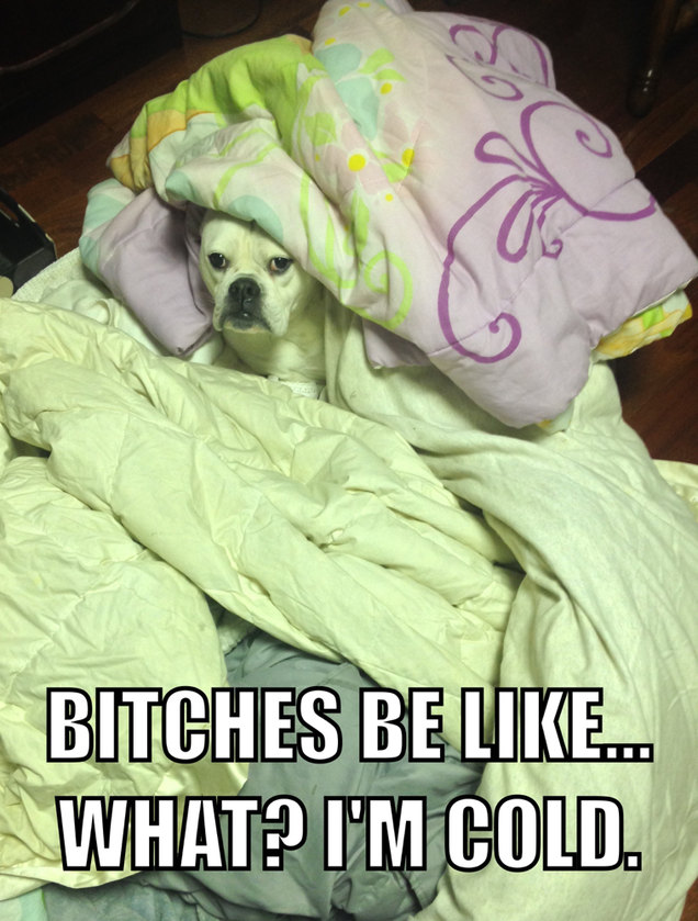 Dog Hogs The Blankets - meme