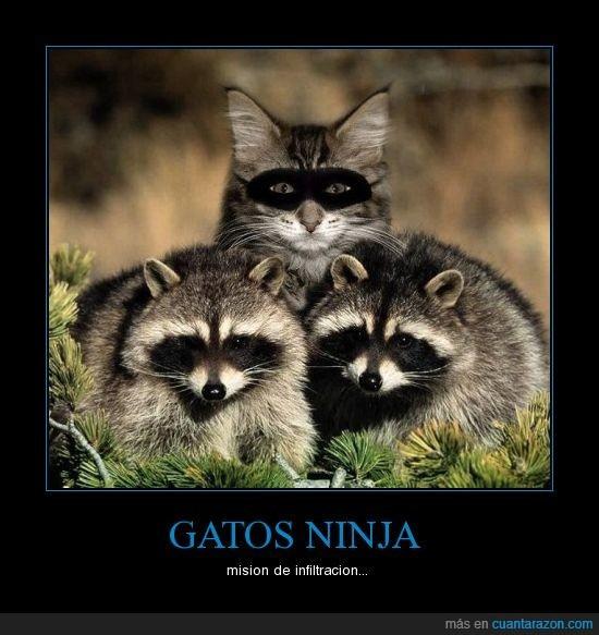 Otro Gato NINJA - meme
