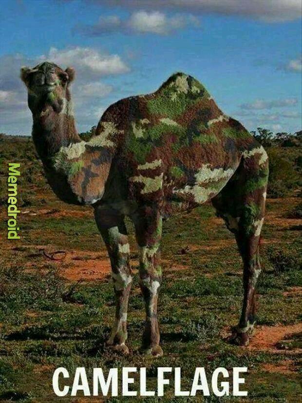Camel - meme