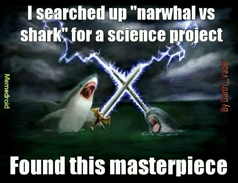 Narwhal - meme