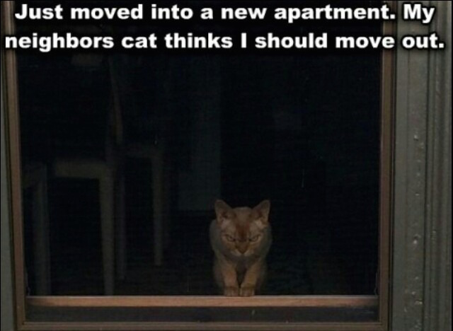 Did I come to the wrong neighborhood? - meme