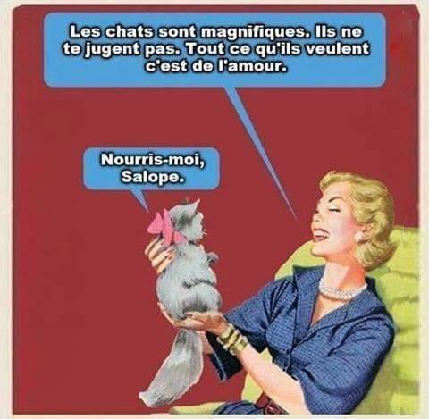 Les chats <3 - meme