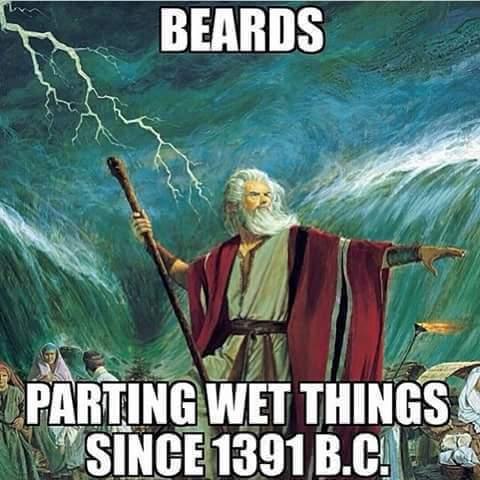 All wet things! - meme