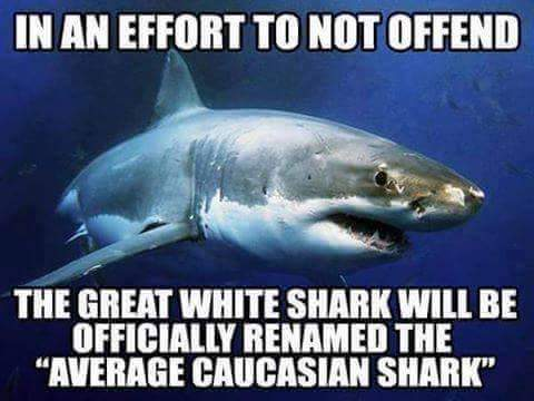 Sharks are so awesome - meme