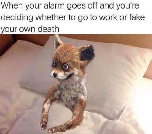 When you're not a morning person - meme