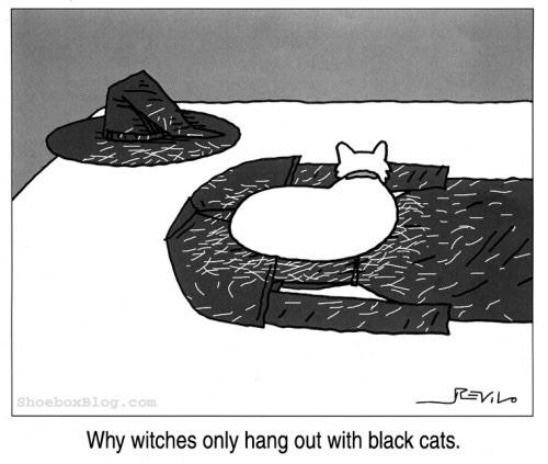 Black cats - meme