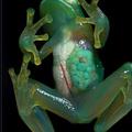 Pour un bon cours de SVT, il faut une belle grenouille.