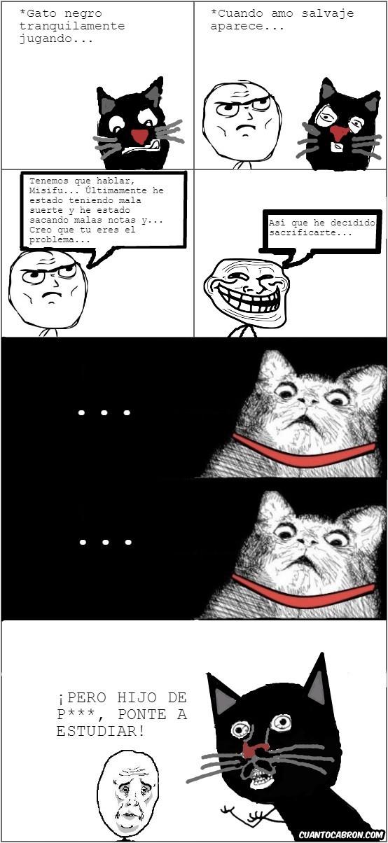 No culpes al pobre gato (original de CC) - meme