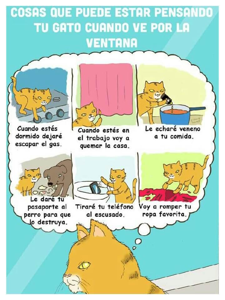 Gatito... - meme